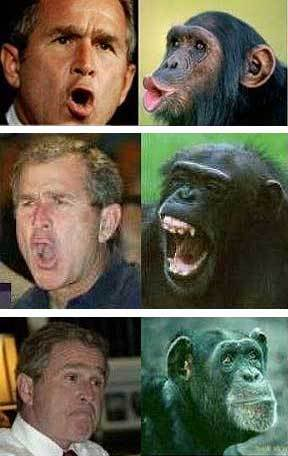 http://www.obamaconspiracy.org/wp-content/uploads/2013/11/george-bush-chimp.jpg